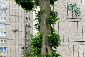 Two green painted bikes adorn the sides of two blocks of flats, highlighted by the green leaves of a tree standing in the foreground in between them.